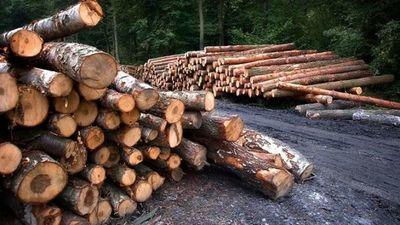 Empresa de EEUU condenada por importar madera de forma ilegal