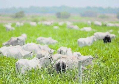 Brasil detecta dos casos de «vacas locas» y suspende la exportación a China