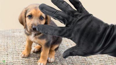 7 simples pasos para mantener a los ladrones alejados de tu mascota