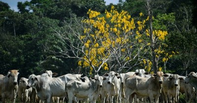 "La Nación / Detectan en Brasil dos casos atípicos de ""vacas locas"""