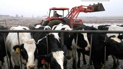 Brasil detecta casos de vacas locas y frena exportación