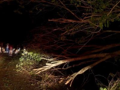 Motociclista muere tras chocar contra un árbol en Horqueta