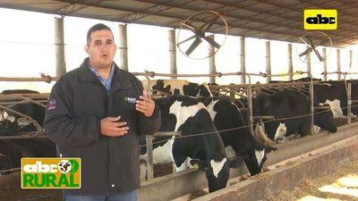 ABC Rural: Nutrición de terneras lecheras en etapa de cría y recría