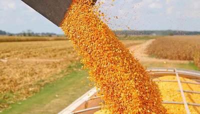 Superficie sembrada de soja y maíz zafriña disminuyó en 2021, según INBIO