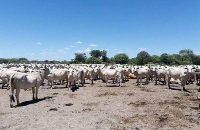 Diputados pedirán informes sobre situación de trabajadores en establecimientos ganaderos