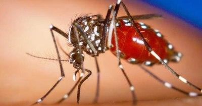 La Nación / Paraguay no registra casos de malaria ni fiebre amarilla
