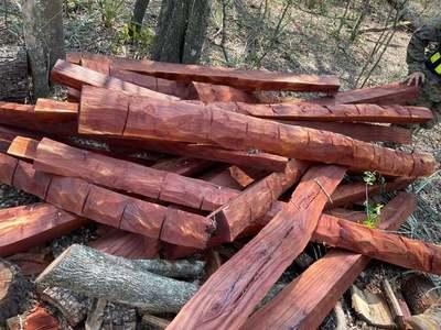Intervienen establecimiento en el Chaco por tala de árboles