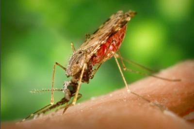 Paraguay sin malaria y sin fiebre amarilla