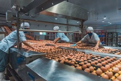Nutrihuevos: una empresa comprometida con el triple impacto