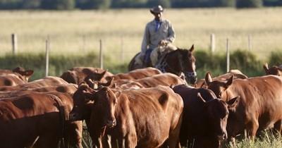 La Nación / La ganadería es un eslabón de crecimiento y desarrollo nacional, resaltan