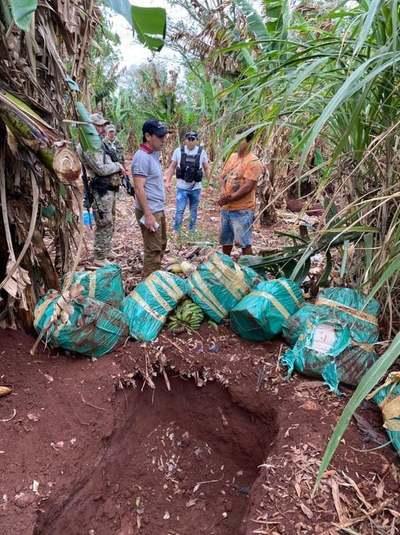 PJC: Incautan más de 1000 kilos de marihuana, oculto entre plantaciones de una finca