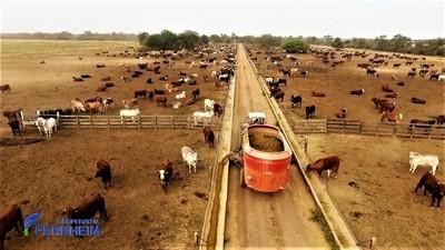 Confinamiento de ganado: una técnica útil para las épocas secas de invierno