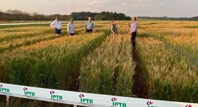 Se realizó día de campo sobre producción de trigo en Itapúa