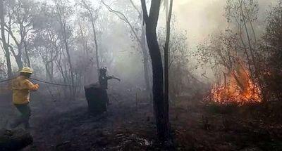 Sancionan ley que prohíbe usos con fines productivos de bosques incendiados