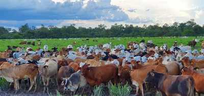 Remarcan que hay potencial de crecimiento sostenido de la ganadería paraguaya