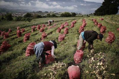Agroempresas colombianas mejoran su productividad con uso de mapeo con drones