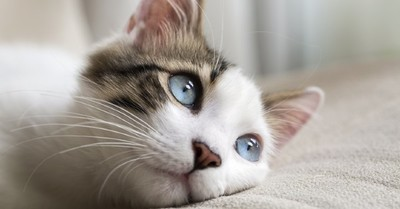Estudio identifica los 7 rasgos de personalidad de los gatos