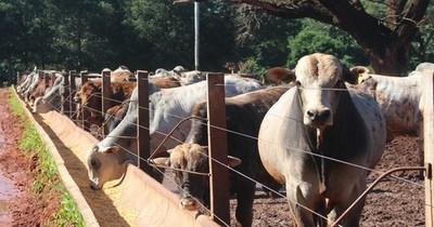 La Nación / Actividad económica se sostiene en la ganadería, manufacturas y servicios