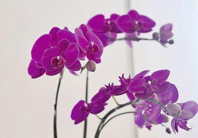 Exposición de orquídeas en el Yacht