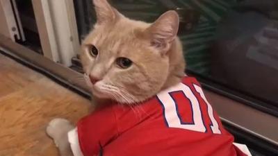 Fanáticos trabajan unidos para rescatar a un gato que quedó colgado del techo de un estadio en EE.UU. (Video)