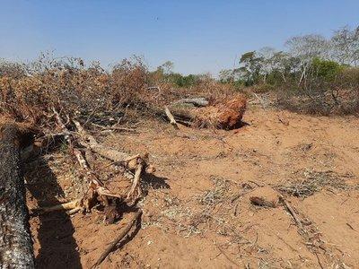 Denuncian presunta tala de árboles sin licencia en el campo