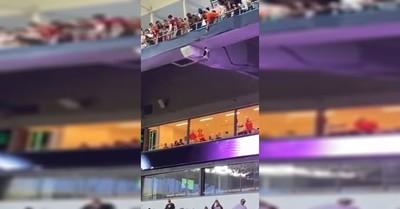 Un estadio completo celebró el rescate de un gato tras caer 20 metros