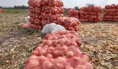 Productores de cebolla anuncian movilización ante aumento masivo del contrabando
