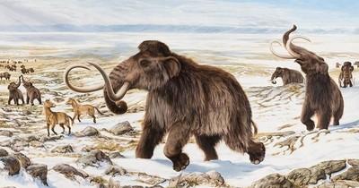 La Nación / Intentarán des-extinción del mamut después de 4 mil años