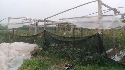 Unos 50 productores afectados por fuerte temporal en el Departamento de Caaguazú