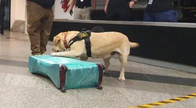 Can antidrogas detecta cocaína en la maleta de una mujer que pretendía viajar a España