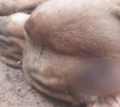 A martillazos matan a un perro en Capiatá