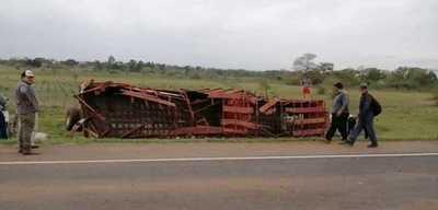 Concepción: Varios toros mueren en un accidente de tránsito