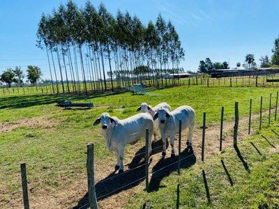 """Las Talas vende mañana viernes 1.000 desmamantes y 150 toros en """"Remate Primavera 2021"""""""