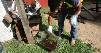 La Nación / Preocupan algunas zonas del país por el alto índice de infestación larvaria