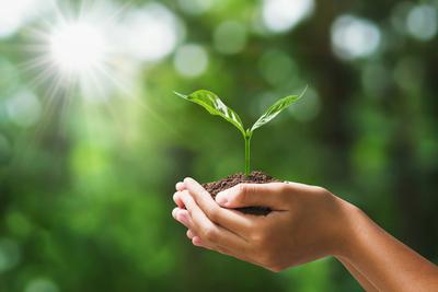 ¿Qué hace el Estado para lograr producción sostenible?
