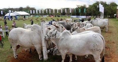 La Nación / Con auspiciosas previsiones inició la Expo Ganadera tras la admisión de animales