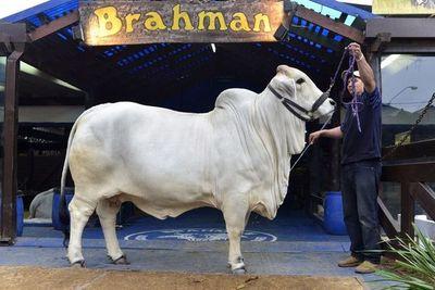 Comenzó la Expo 2021, con enfoque especial en ganadería y automotores