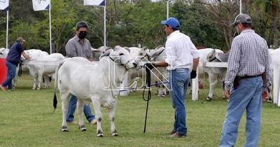 La Nación / Paraguay es un país adelantado en materia de reproducción ganadera, aseguran