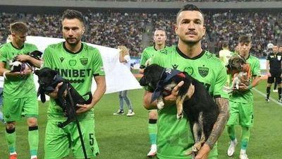 La federación rumana de fútbol presentará en cada partido perros para promover la adopción