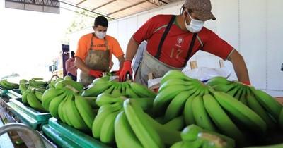 La Nación / Alimentación escolar: Senado aprueba incluir otros productos, no solo la banana