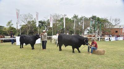 Genética de bovinos sobresale en proceso de admisión de la Expo