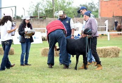 Con inscripción récord, esperan que siga la tendencia alcista de precios en ovinos