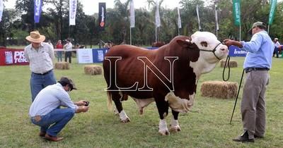 La Nación / Prosigue sin complicaciones el ingreso y admisión de animales en la Expo