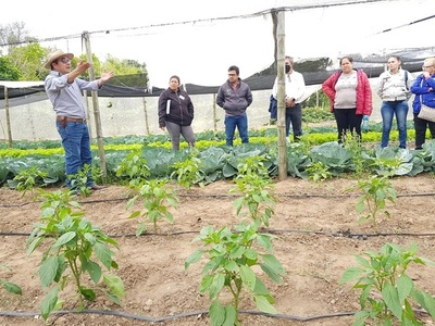 Horticultores de Ayolas reciben capacitación en manejo de cultivos en invernadero