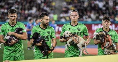 Futbolistas de Rumania fomentan adopción de perros