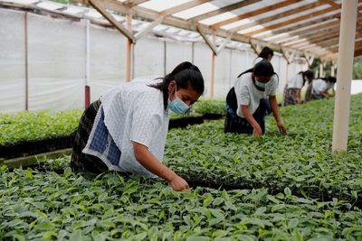 Campesinos de Guatemala atacan al cambio climático con agricultura resiliente