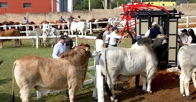 La Nación / Prosiguieron sin complicaciones ingreso y admisión de los animales en la Expo