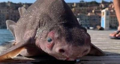 Animal con cuerpo de tiburón y cabeza de cerdo fue hallado en Italia
