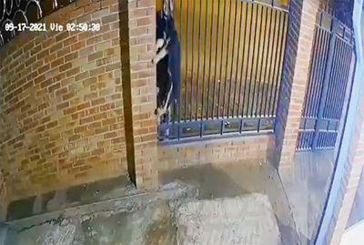 Video de cómo los ladrones roban un cachorro en San Lorenzo