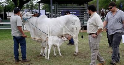 La Nación / Productores lecheros celebran la realización de la expo ganadera